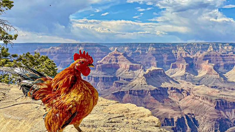 Scruffy has visited numerous states and many famous locations across the country, such as the...