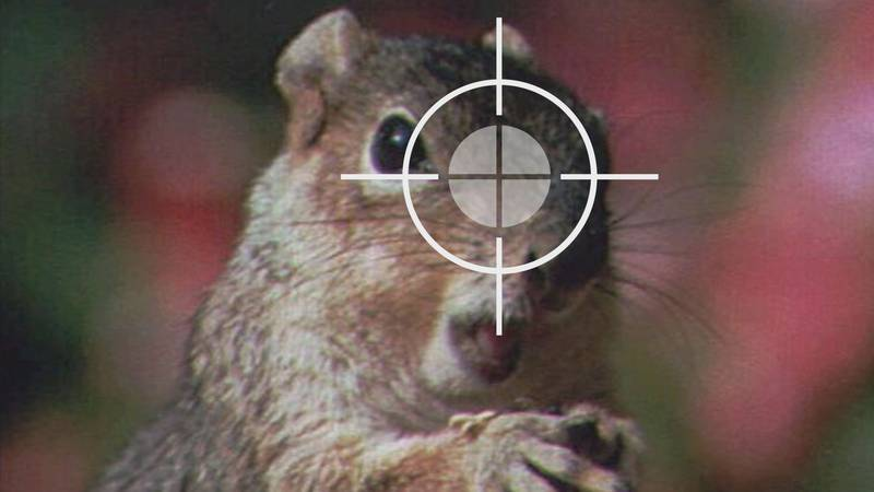 A squirrel in the crosshairs.