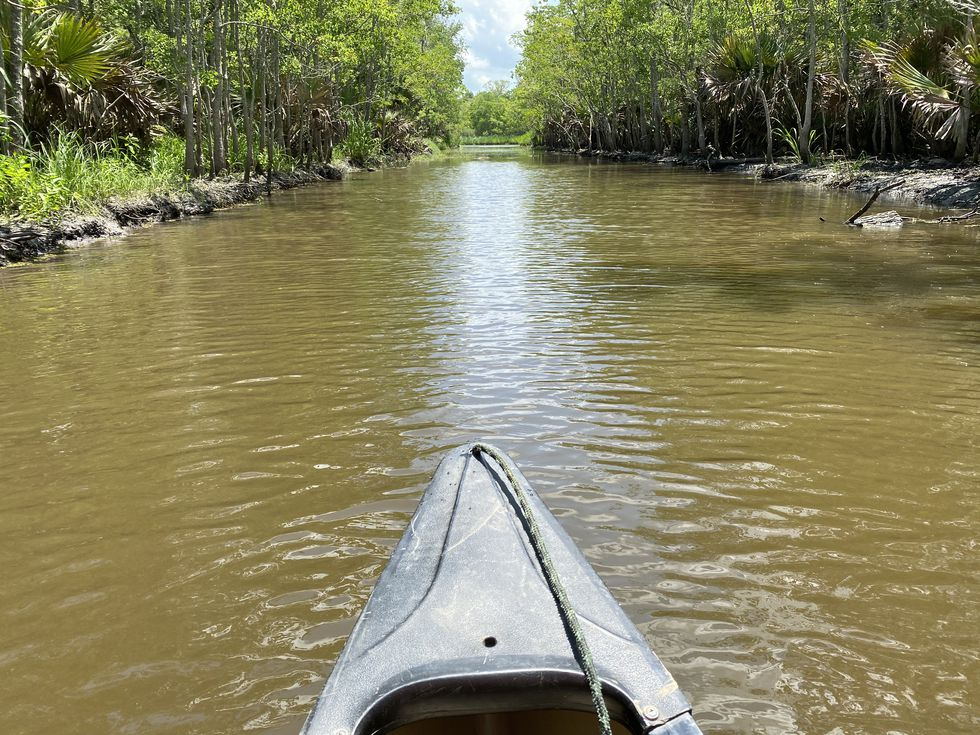 Here's the view of the bayou from our canoe. We're definitely not professional paddlers.