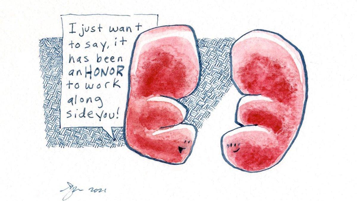 Matt DeFord's illustration of kidneys pre-op