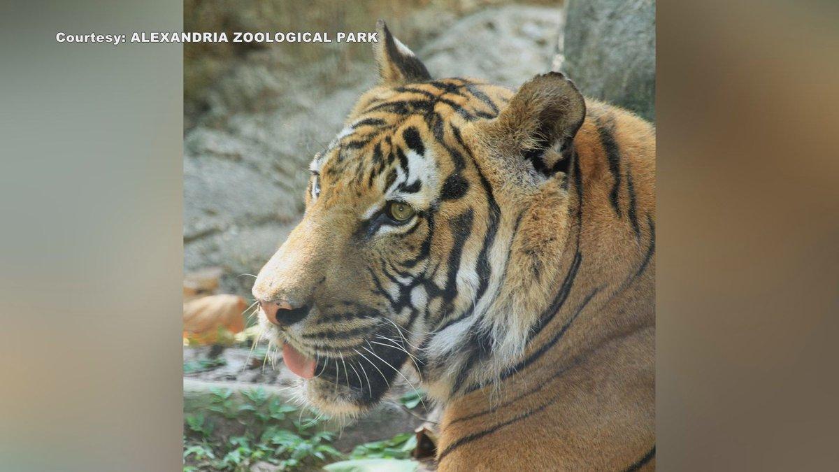 Jammu, the Malayan tiger