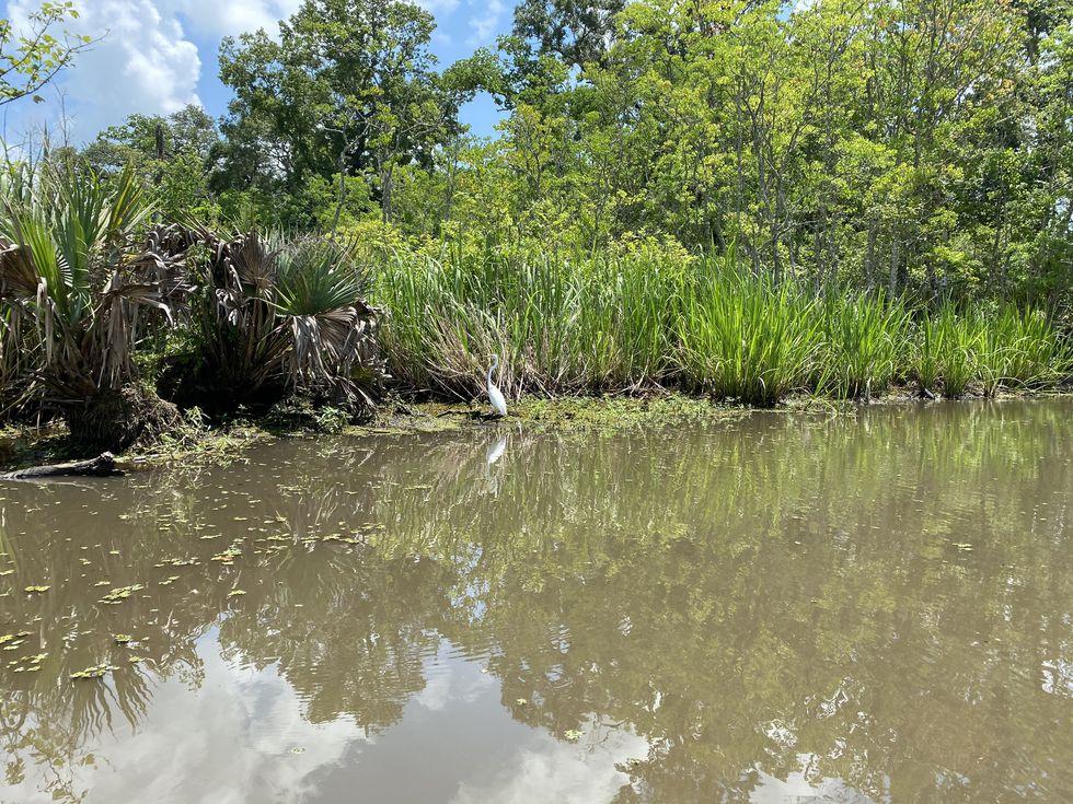 Canoeing the bayou, we ran into alligators, fish and this beautiful bird.