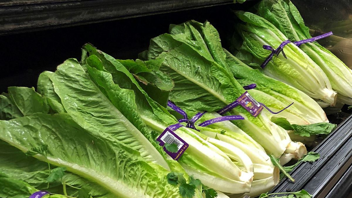 This Nov. 20, 2018 file photo shows Romaine Lettuce in Simi Valley, Calif. U.S. health officials are telling people to avoid romaine lettuce grown in Salinas, Calif., Friday, Nov. 22, 2019, as they investigate a food poisoning outbreak. They also say not to eat the leafy green if the label doesn't say where it was grown. | Source: AP Photo / Mark J. Terrill